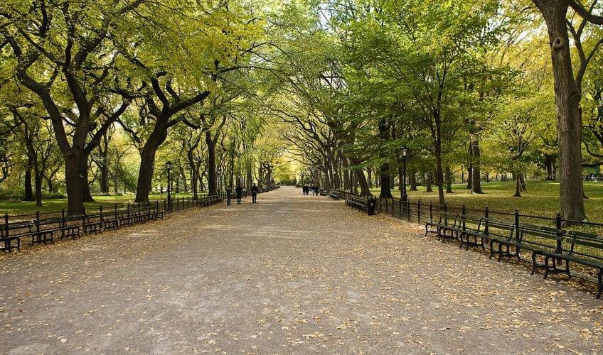 Urban Forestry
