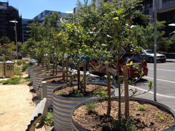 Citygreen - Community Gardens Spreading Around Australia