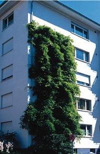 Citygreen add Brandmeier Green Walls to product range