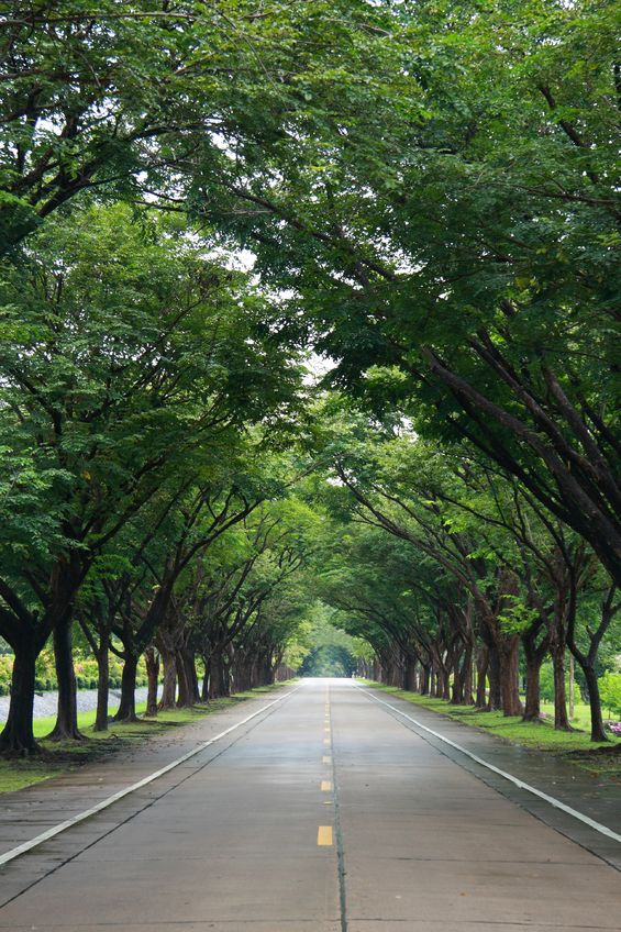 Urban Forestry and Transportation