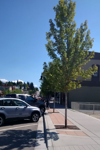 3 years growth of trees in rossland