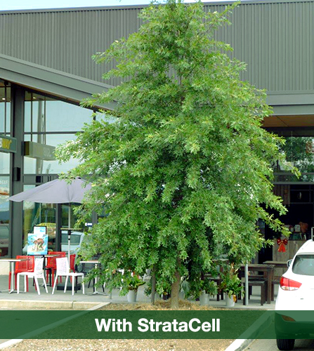 trees with stratacell