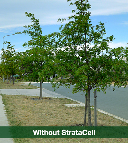 trees without stratacell