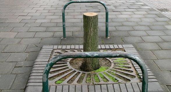 assessing trees